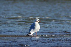 Vogelspotters Julianadorp aan Zee