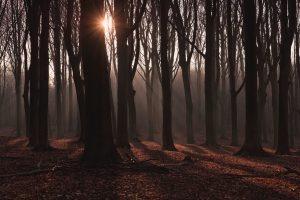 Het Vennenbos